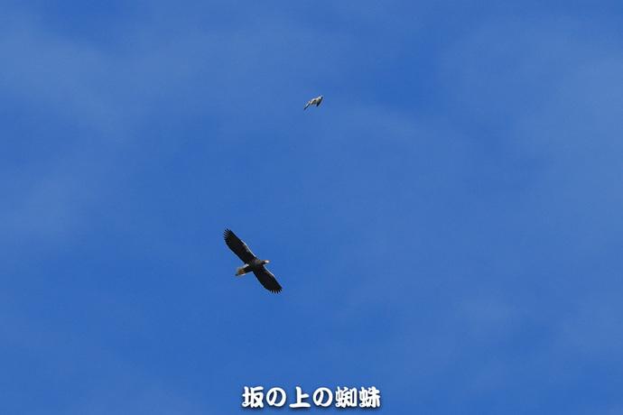 01-E1DX8628.jpg