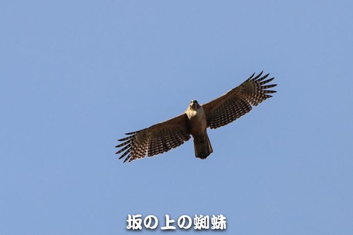 01-TACK0156.jpg