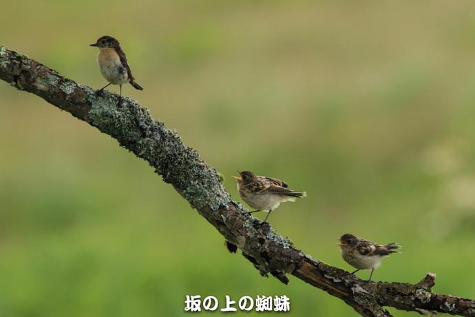 01-TACK3213合成-2LR-1.jpg