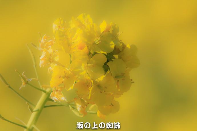 02-EO7D2687-2LR-1.jpg