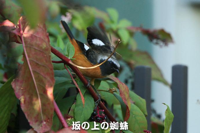 03-E1DX4926-LR.jpg