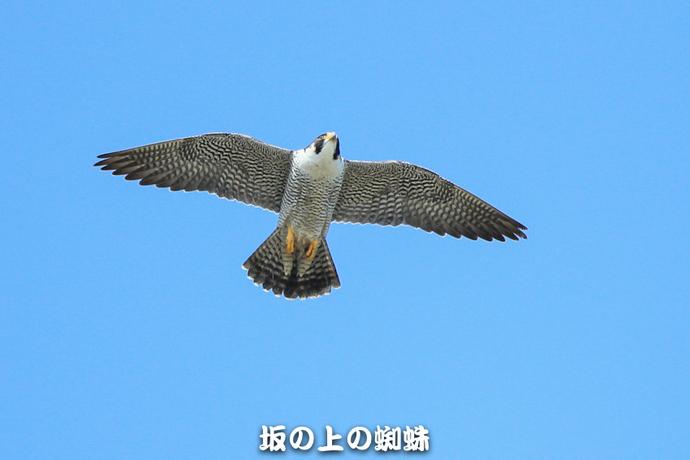 04-E1DX0635-LR.jpg