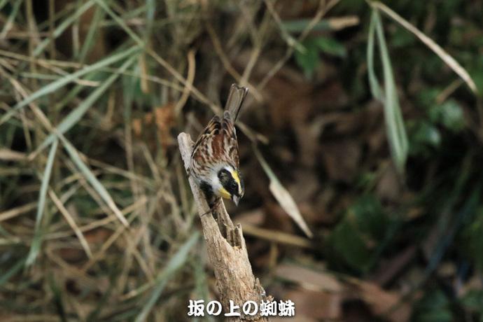 04-TACK4618-2LR-1.jpg