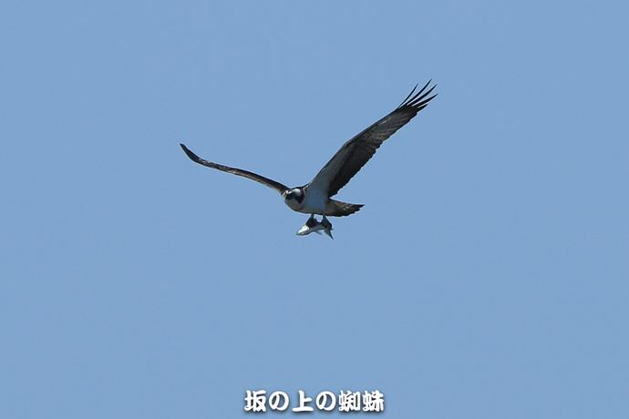 06-E1DX8713.jpg