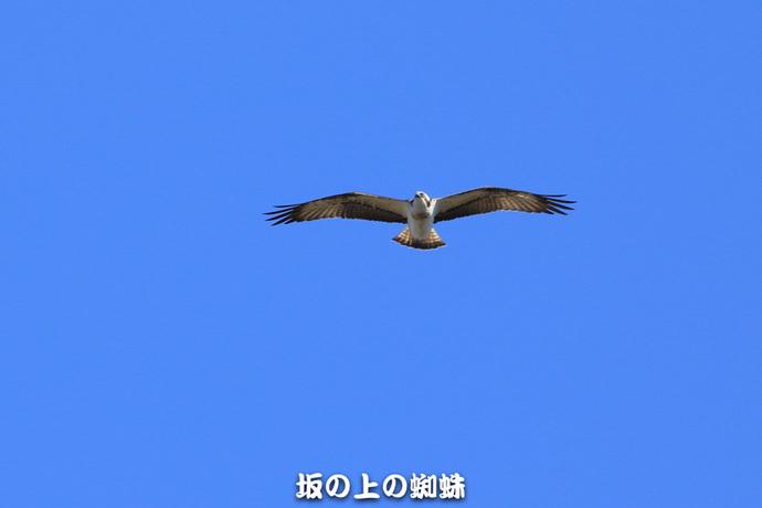 07-EO7D8266.jpg