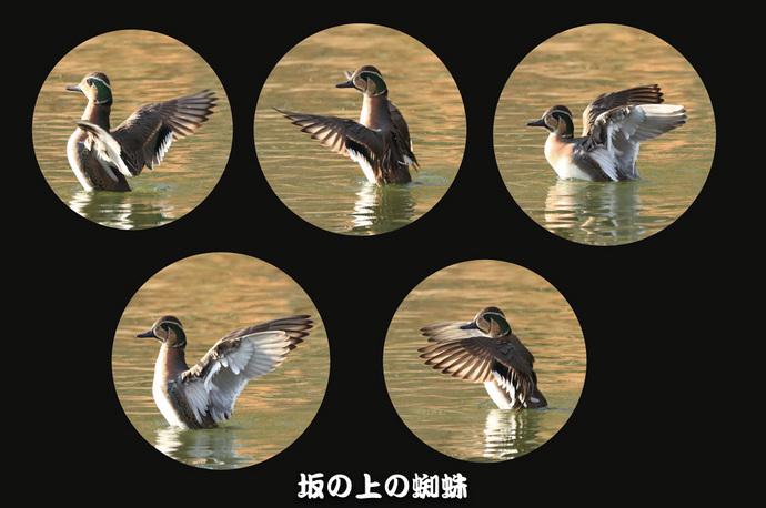 07-TACK0195連続-2-EditLR-1-2.jpg