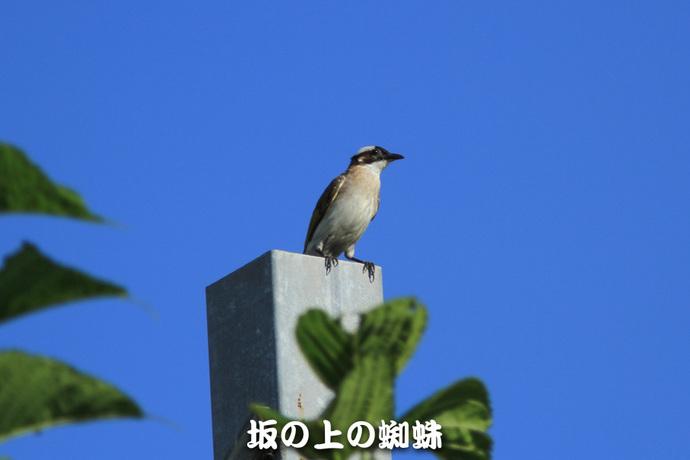 08-IMG_5382-2-LR.jpg