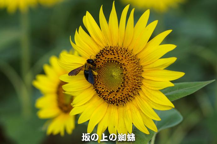 08-PICT0186-LR.jpg