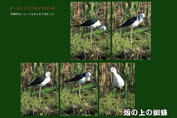09-E1DX3590-集合-2LR-1-2.jpg