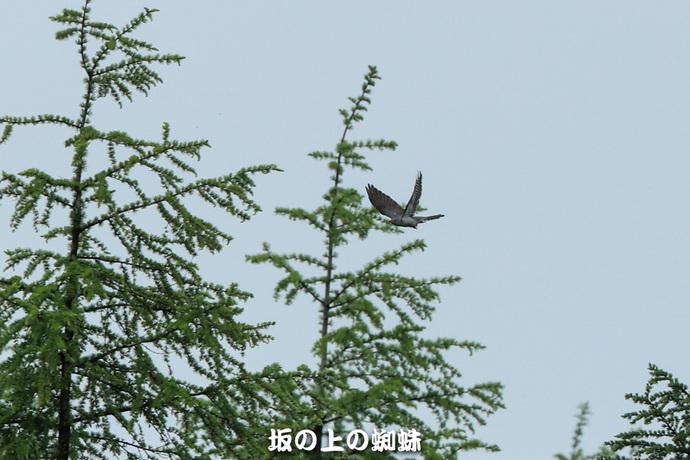 09-E1DX5284-2LR-1.jpg