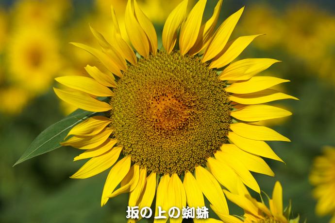 09-PICT0204-LR.jpg