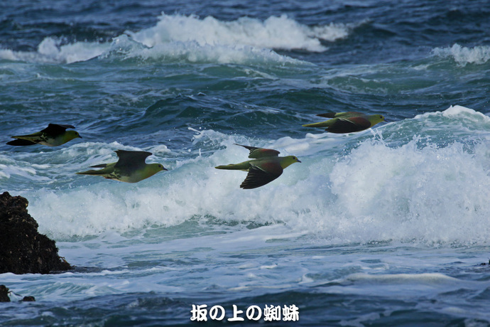1-EO7D3593水面飛翔-統合-B.jpg