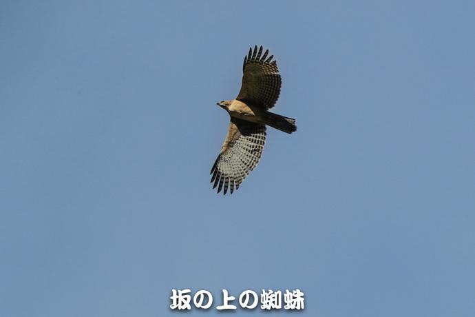 13-TACK0454.jpg