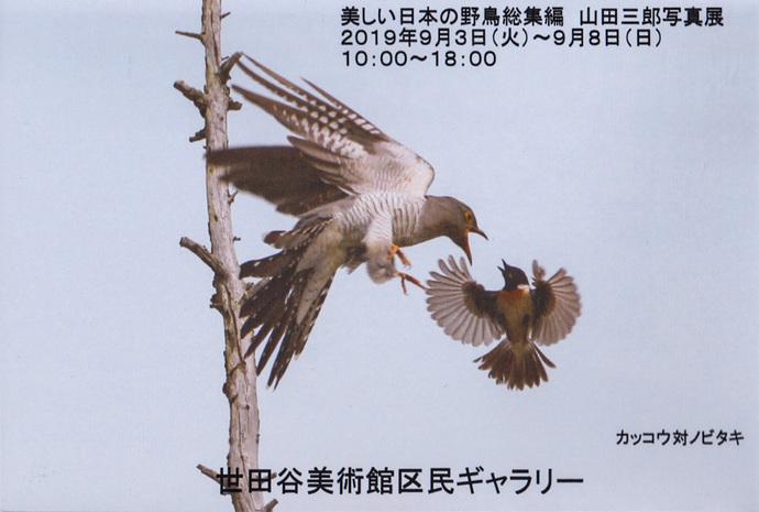 3-カッコウ&ノビタキ-1.jpg