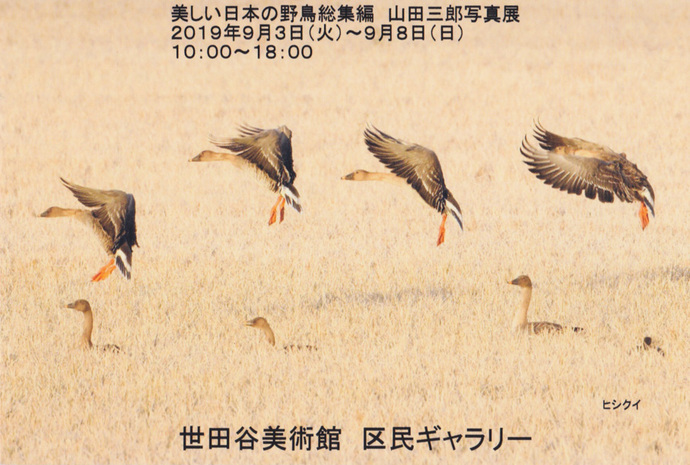 5-ヒシクイ飛翔-1.jpg