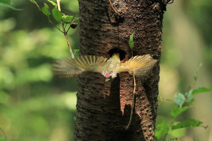 巣穴から飛び出し。木漏れ日が射していたので何とか撮れた。