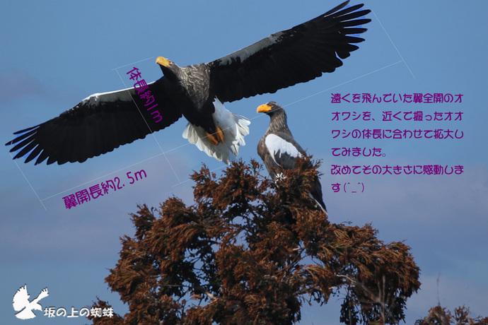 IMG_0295ps-4-3LR-1.jpg